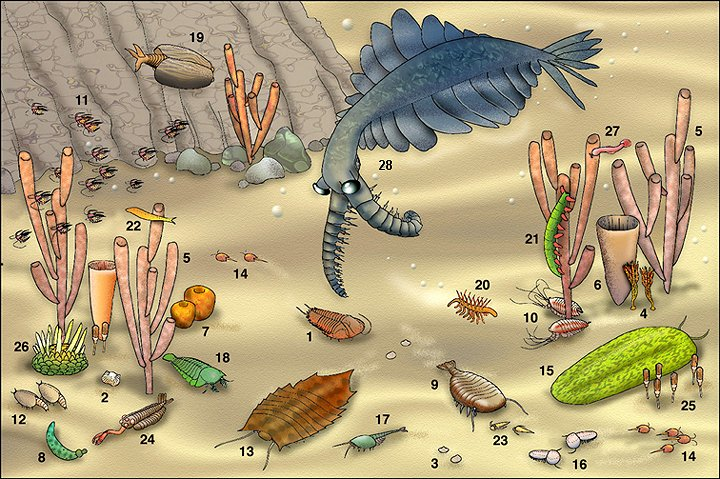 Burgess Shale reconstruction